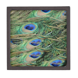 Peacock Tail Feather Blue Eyes With Growth Jewelry Box