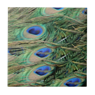 Peacock Tail Feather Blue Eyes With Growth Tile