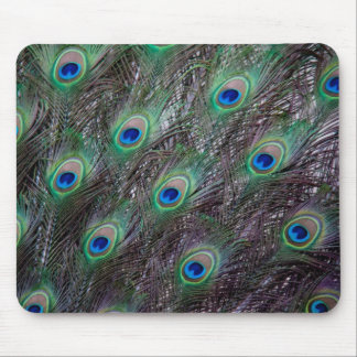 Peacock tail mousepad