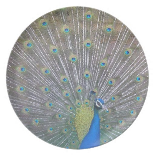 Peacock (the One) Dinner Plates