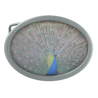 Peacock (the One) Oval Belt Buckle