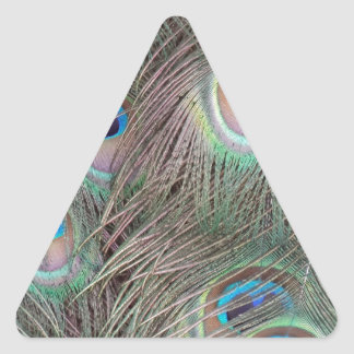 Peacock train  Feathers Triangle Sticker
