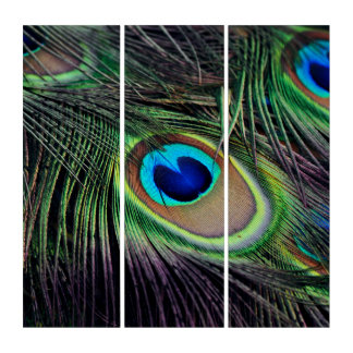 Peacock Triptych