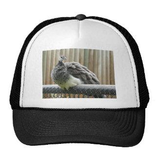 peacock trucker hat