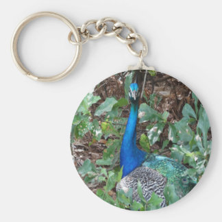Peacock Under A magnolia Tree Basic Round Button Keychain