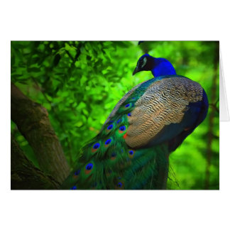 peacock up a tree card