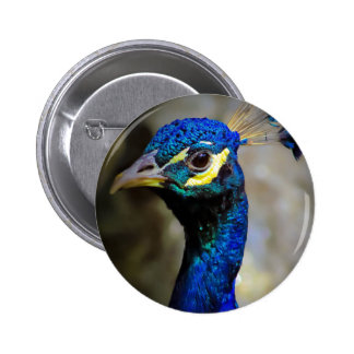 Peacock Wildlife Photo Buttons