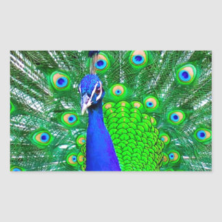 Peacock with fanned tail rectangular sticker