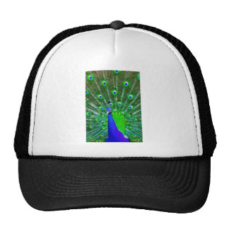 Peacock with fanned tail trucker hat