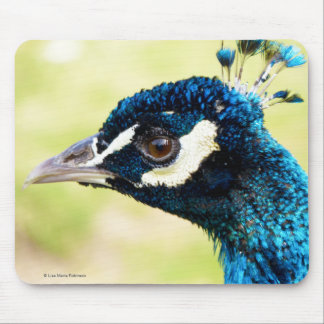Peacock with new Crest   Peafowl Mousepad