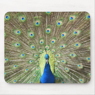 Peacock with Open Tail Mouse Pad