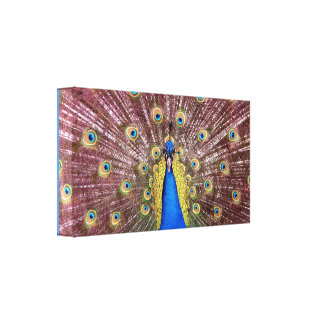 Peacock Wrapped Canvas Print
