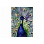 peacock-www.pixi-art.com postal