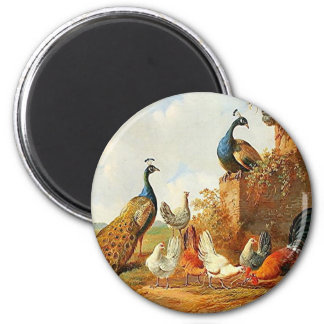 Peacocks and chickens 2 inch round magnet