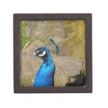 Peacock's Portrait Premium Jewelry Box
