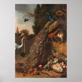 Peacocks Poster