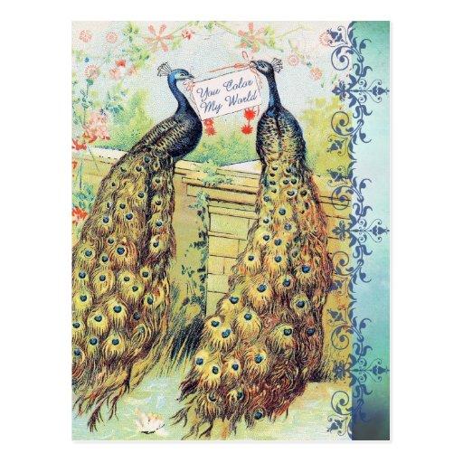 Peacocks:  You Color My World Postcards