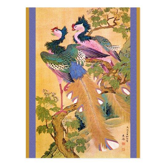 peacocksnotebue postcard