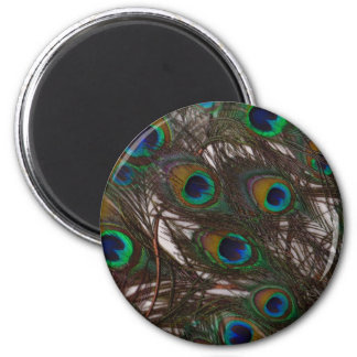 Peacoquette ~ Peacock Feathers 2 Inch Round Magnet