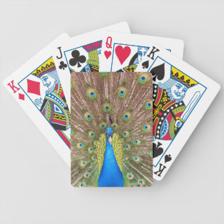 Peafowl azul hermoso de la cola de milano del baraja cartas de poker