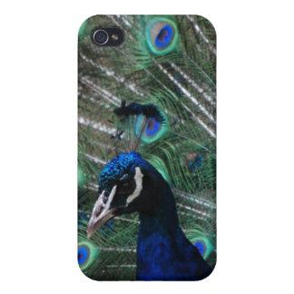 Peafowl Bird iPhone Case iPhone 4 Cases