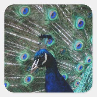 Peafowl Bird Stickers