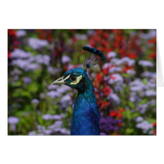 Peafowl Greeting Cards
