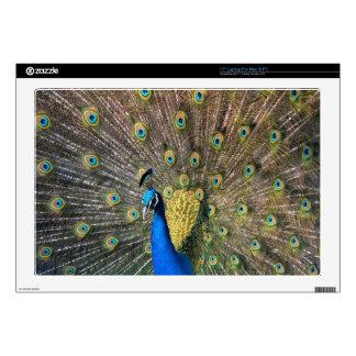 Peafowl colorido lindo portátil skin
