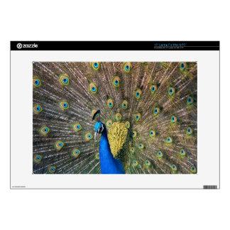 Peafowl colorido lindo skins para 38,1cm portátiles