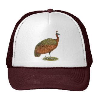 Peafowl:  Congo Peahen Gorros Bordados