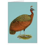 Peafowl:  Congo Peahen Greeting Card