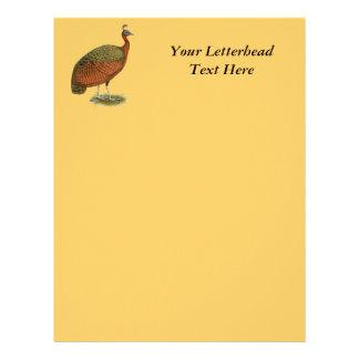 Peafowl:  Congo Peahen Letterhead
