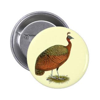 Peafowl:  Congo Peahen Pins