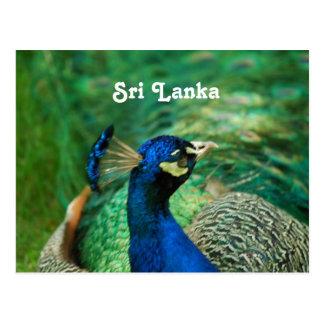 Peafowl de Sri Lanka Postales