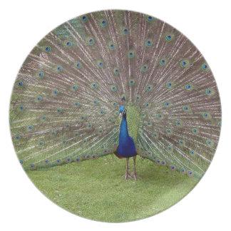 Peafowl del pavo real plato