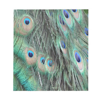 Peafowl Delight Notepad