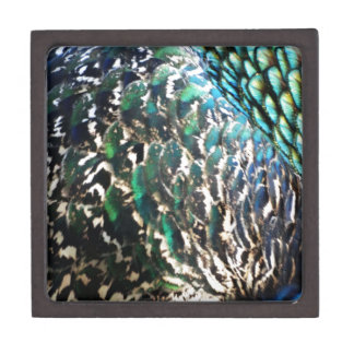 Peafowl Feathers Brilliant Colors Gift Box
