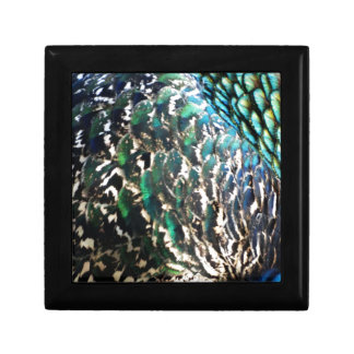 Peafowl Feathers Brilliant Colors Keepsake Box