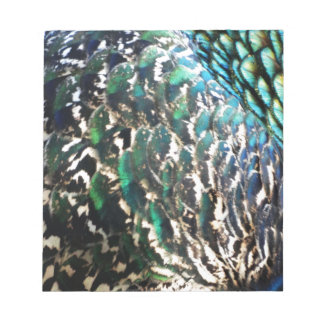 Peafowl Feathers Brilliant Colors Notepad
