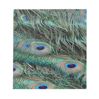 Peafowl Feathers iridescent eye   spots Notepad