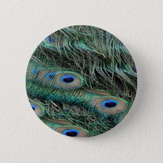 Peafowl Feathers iridescent eye   spots Pinback Button