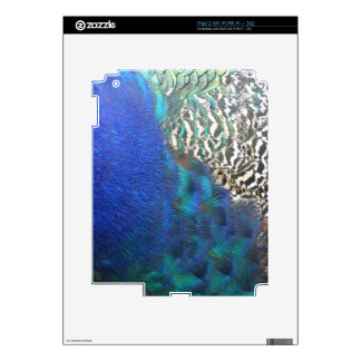 Peafowl Feathers Rich In Colors Decal For iPad 2