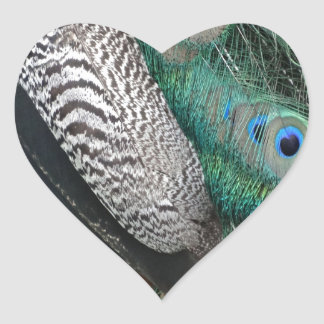 peafowl feathers small eyes heart sticker