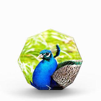 peafowl peacock bird peace calm joy acrylic award