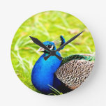 peafowl peacock bird peace calm joy clocks