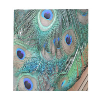 Peafowl Wing Feathers Notepad