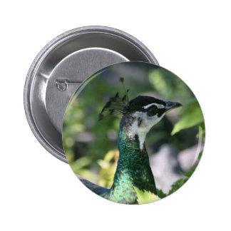 Peahen Profile Pinback Buttons