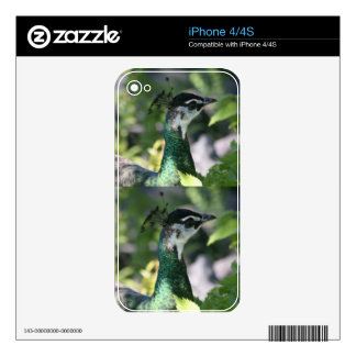 Peahen Profile Skin For The iPhone 4