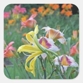 Peak Bloom - Daylilies Square Sticker