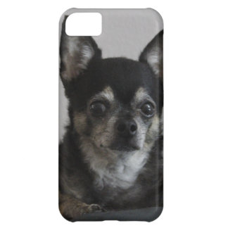 Peanut Chihuahua Cover For iPhone 5C